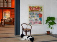 Dandy Wall Canvas - Desperate Dan